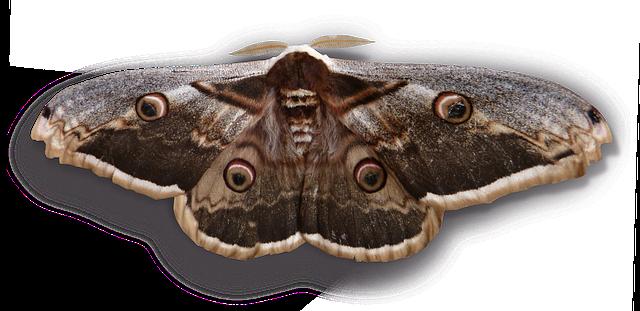 obří motýl.png