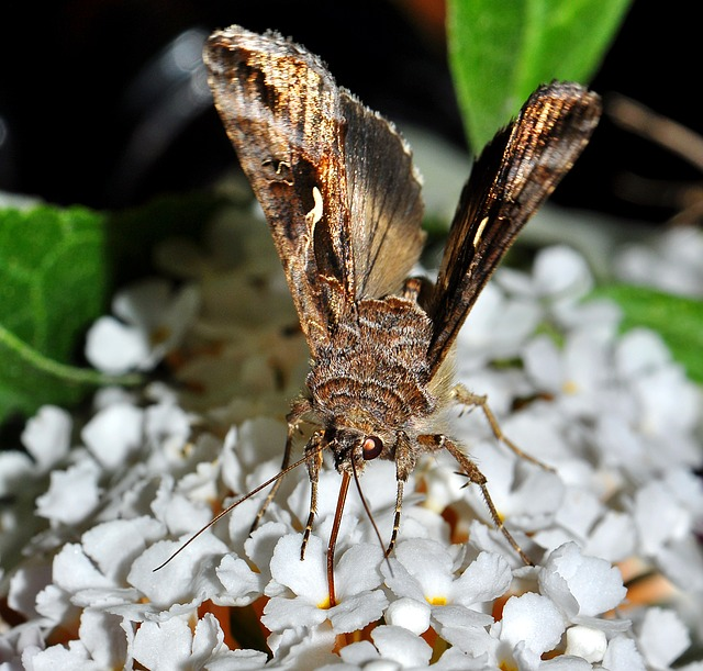noční hmyz.jpg